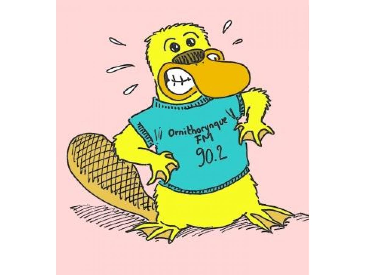 ornithorynque.net